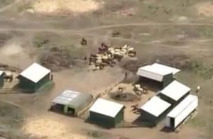 An aerial photo of the herd at Labrador Equine Sanctuary in New Jersey