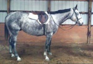 JR before brought to NJ equine sanctuary owner accused of animal cruelty Sarah Rabinowitz