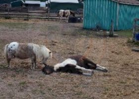 Animal Cruelty | How can you help horses today? | Horse
