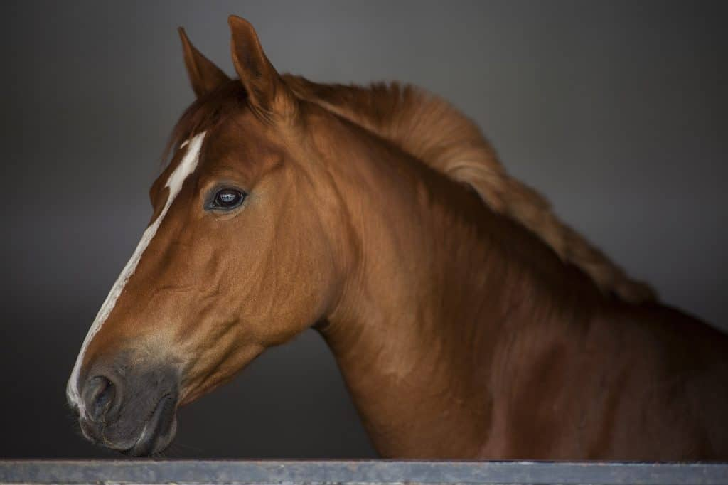 Equine Microchip Look-up Tool Streamlining horse identification with microchipping look up tool