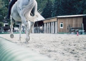 Power of perception in horses