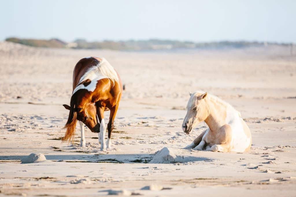 Kickstart your equine marketing now with a Horse Marketplace listing at HorseAuthority.co before limited time price savings disappear like hoof prints on a sandy shore.
