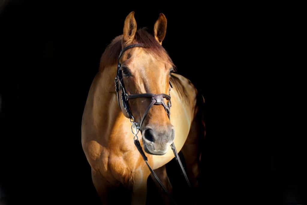 What are the symptoms of equine herpes myeloencephalopathy (EHM)?