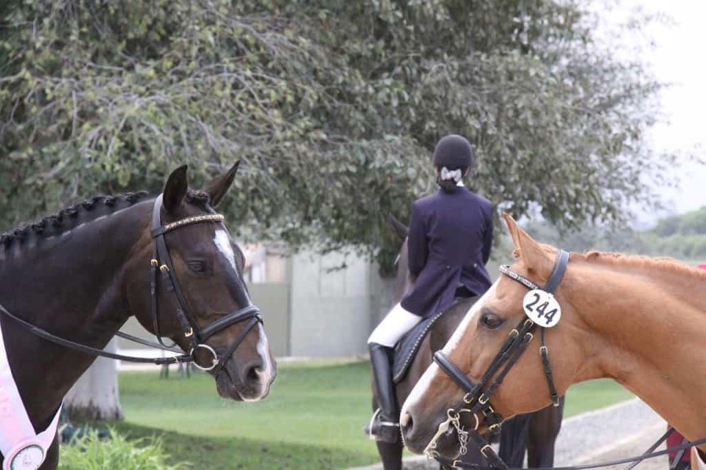 How Mental Resilience Enhances Horse Riding Success