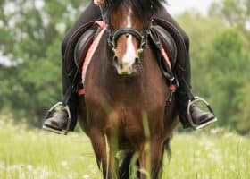 Are you ready for horse ownership? 3 Questions
