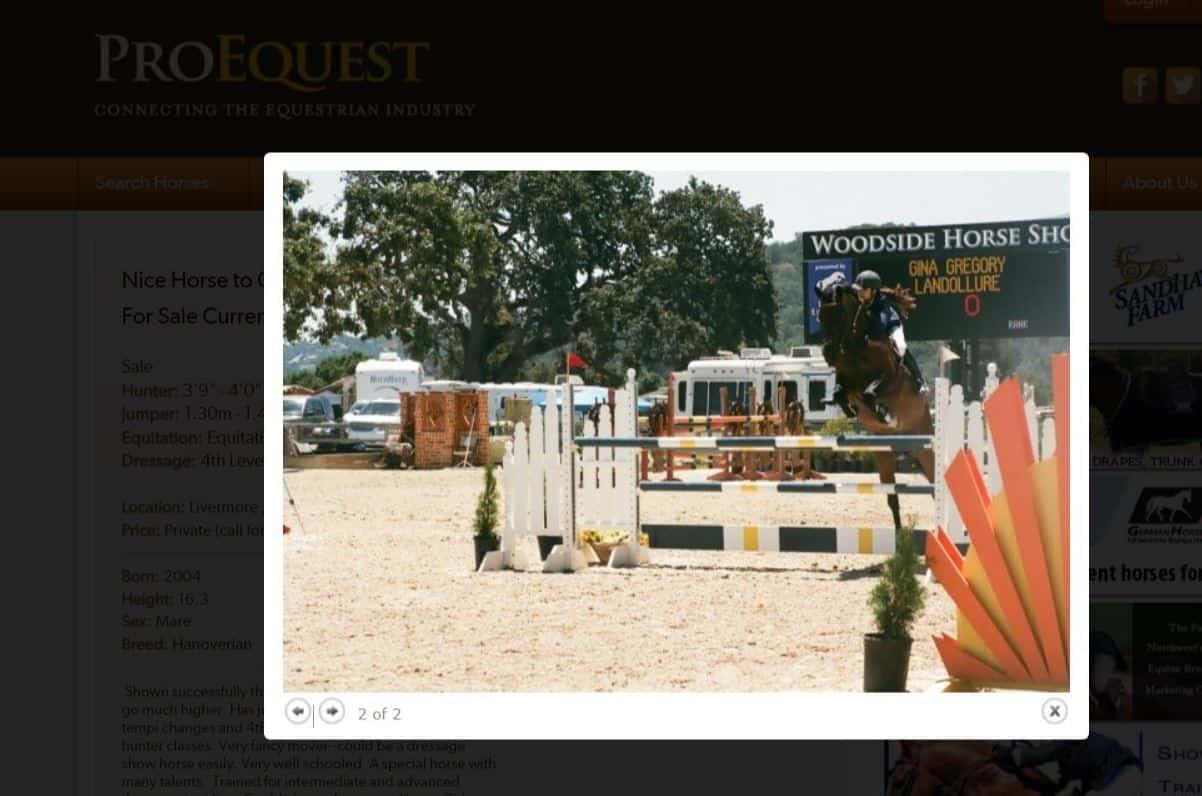 $8+ Million Verdict Against Gregory Family for Horse Rescue