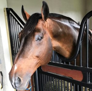 Hardrock Z Emanuel Andrade _ FBI Seized Horses
