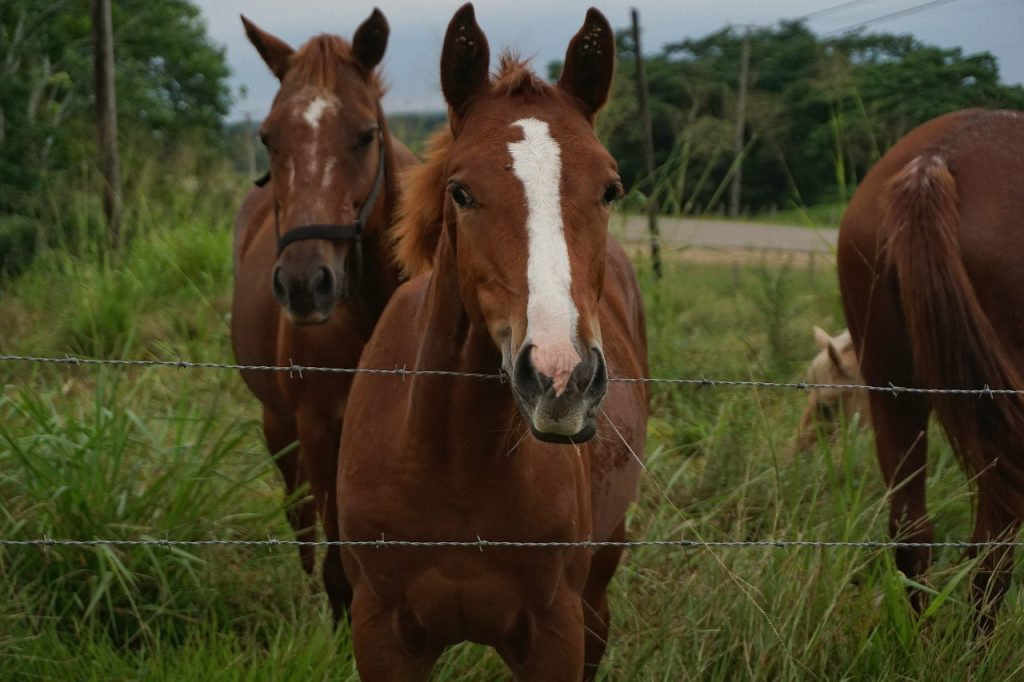 "Officials from the Texas Animal Health Commission (TAHC) state seven of the EIA positive ""racing Quarter Horses"" and another horse on-site tested positive for a secondary infectious disease called equine piroplasmosis (EP)."