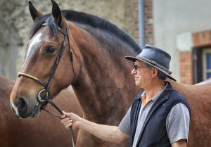 How to hire an equine appraiser or equine expert witness for equine litigation