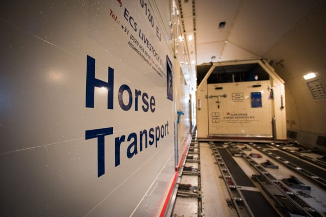 Miami Animal Import Horse Quarantine Reopens after 4 Horses Die