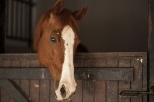 Nevada State Veterinarian Recommends: Cancel Horse Events due to EHM
