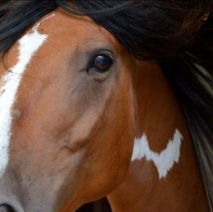 Arizona agriculture officials confirm two horses positive for EHV