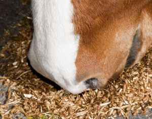 Cargill is issuing a voluntary recall of Southern States horse feed. It comes as a result of elevated aflatoxin levels which can poison your horse resulting in sickness and death, according to veterinarians.