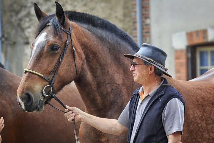 Promote your Horse Business with the Equine Marketing Professionals